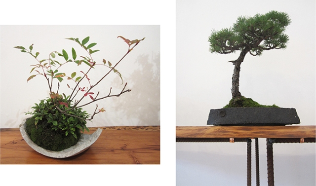 14.Accent planting.pine 1.ds